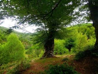 Macedonian hills I by SarkaSkorpikova