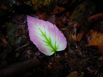 Pink like peas by SarkaSkorpikova