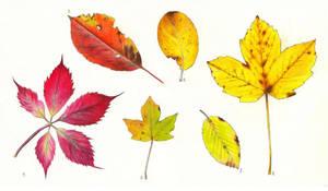 Autumn leaves by SarkaSkorpikova