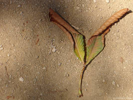 chestnut2 by sommerstod