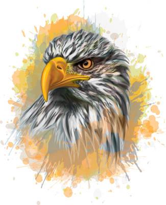 Bald Eagle - Vector Portrait by 8LouLou8