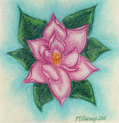 Birthday Magnolia by roslaug