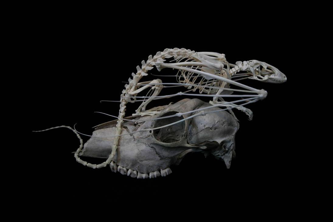 Dragon skeleton on skull by Exifia