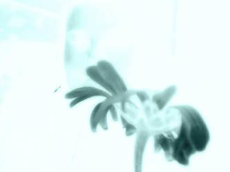 xray daisy by nyaid1280