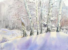 Birch-trees in winter by mashami