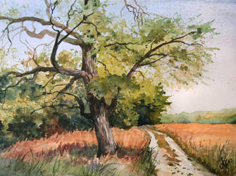 Old acacia by mashami