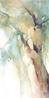 Acacia by mashami