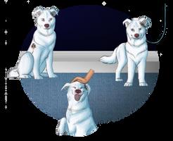 TKC Puppy Training Program - Bunny by xMush-Kennelsx