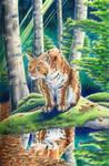 lynx by imcy