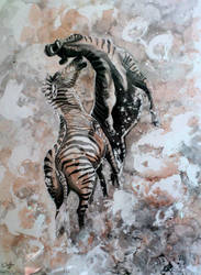 zebras by imcy