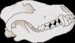 f2u wolf skull by cvckold