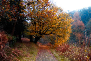 Autumnal by horai