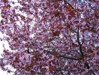 blooms II by Bj83
