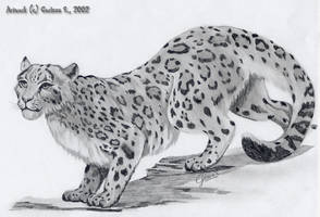 snow leopard by ChaosCurry