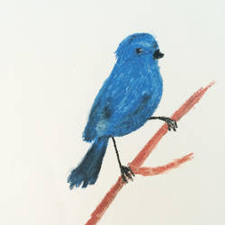 Blue bird by rosachinensis