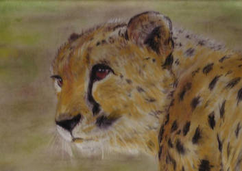 Cheetah by MinamiTakahashi
