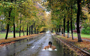 Swimming-in-road by Photo-Manips-by-Ed
