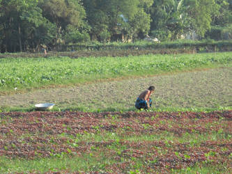 A Farmer is Working in His Field by iloverifat