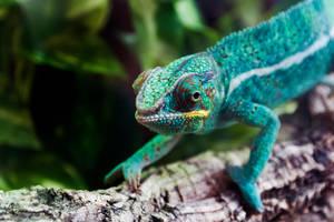 Chameleon by TakeTheMoment