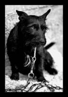 Dog by janpirnatphoto
