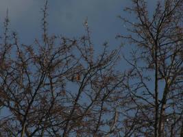 Sparkling Tree Tops by MentuSanarih