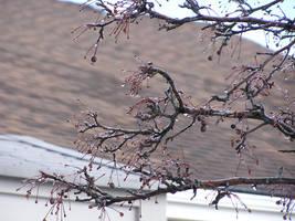 Frozen Branches by MentuSanarih