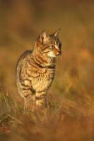 La jeune lynx by Sblourg