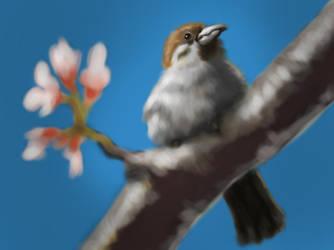 Sketch A Bird by devchitap