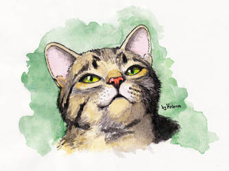 Cat Watercolor by Krinna