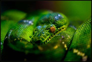 Snakehead by ciaraan
