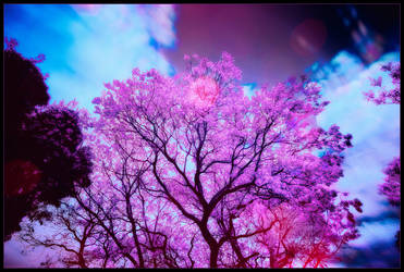 Spring by ciaraan