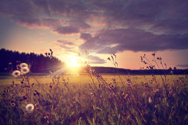 Sunlit fields by Floreina-Photography