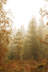 Mist by Floreina-Photography