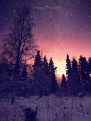 Winter stars by Floreina-Photography