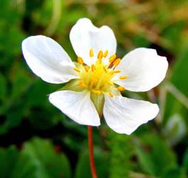Flower 7 by myles04