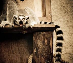 Amazed Lemur by tulutass