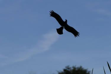 Avian stunt flyer by Dowlphin