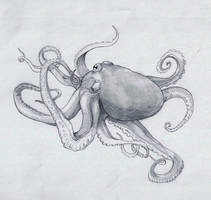 Octopus by Rievil