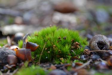 Moss by Fallingo