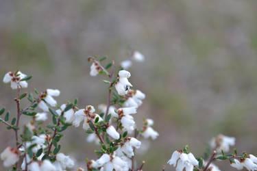 white flower by Fallingo