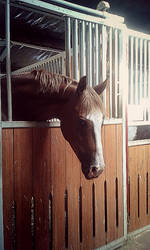 Horse in Stable by LittleAlicorn