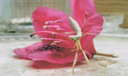 Mantis 1 by LittleAlicorn