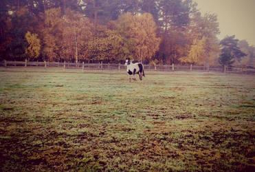 Sammy - galloping by LittleAlicorn