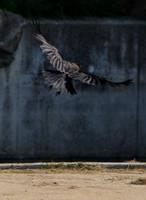 Raven by H2-HELLHORSE