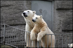 Mummy and son watching out by AF--Photography