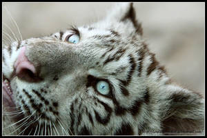 Blue eyes by AF--Photography