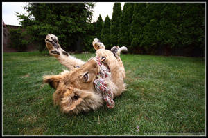 Playing little kitty by AF--Photography