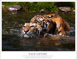 Face Lifting by AF--Photography