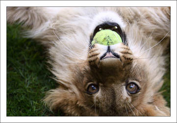 Akimba: Tennis by AF--Photography