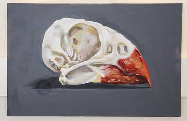 Cardinal Skull by beespit